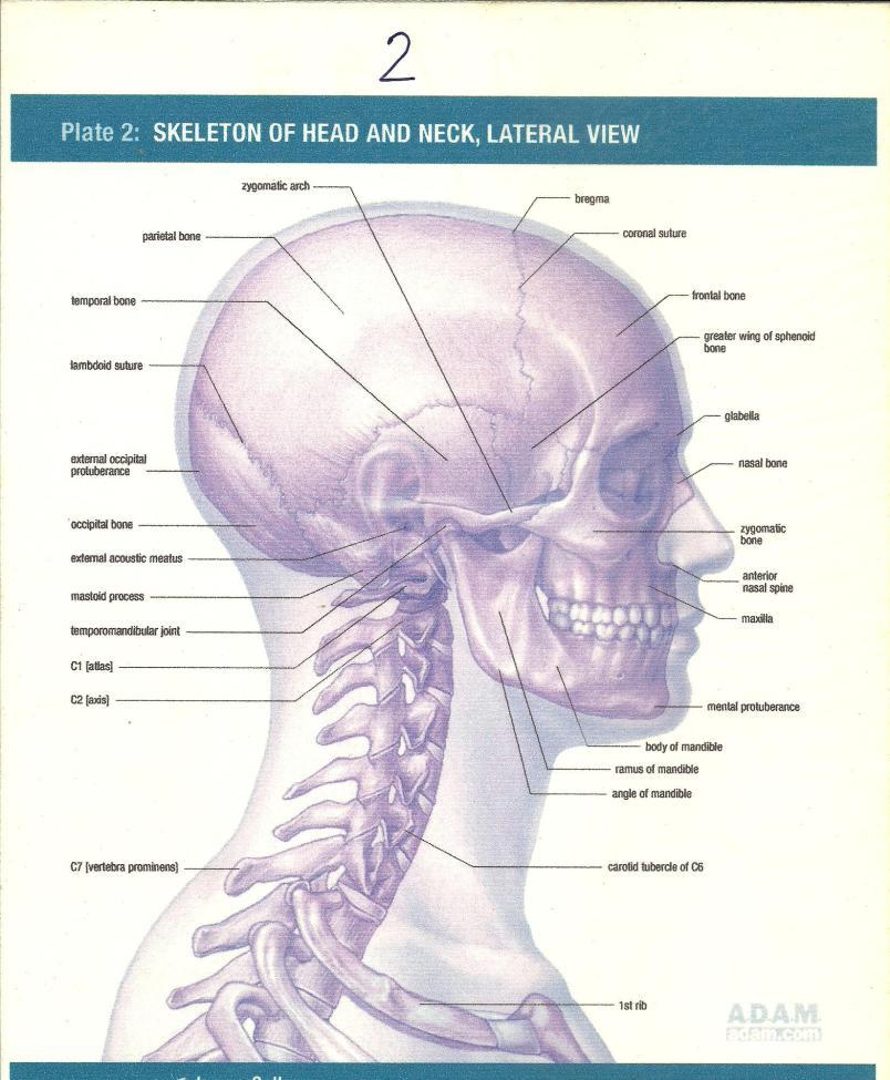 cervical001 004